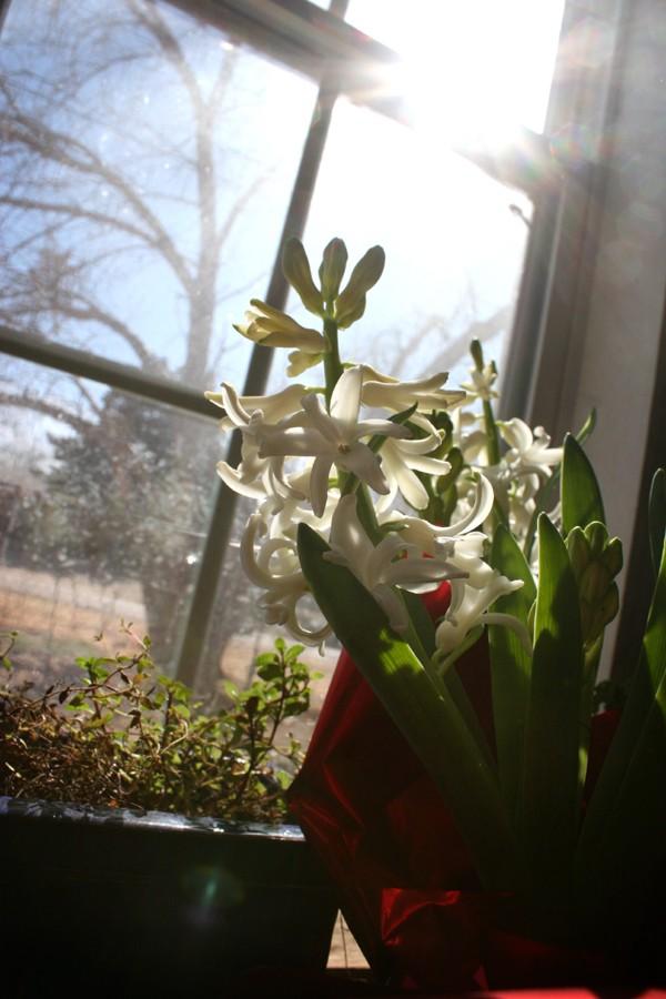 flowers_3jpg
