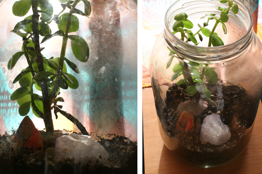 music room terrarium