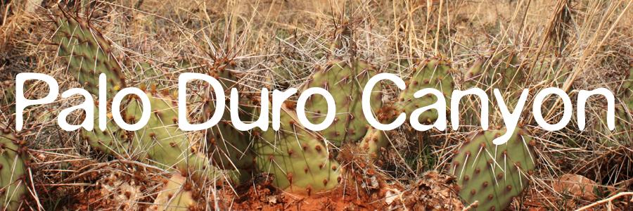 palo_duro_cactus