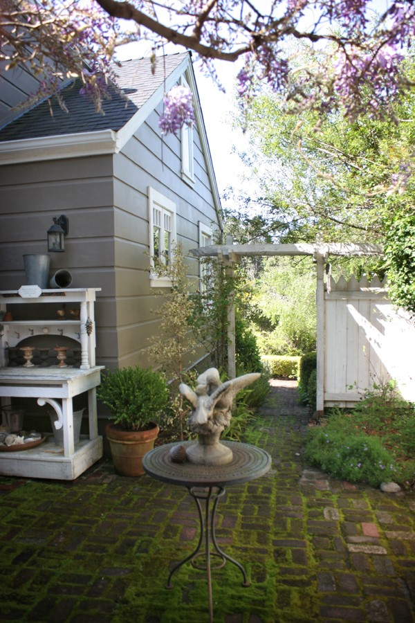 side_yard_wisteria