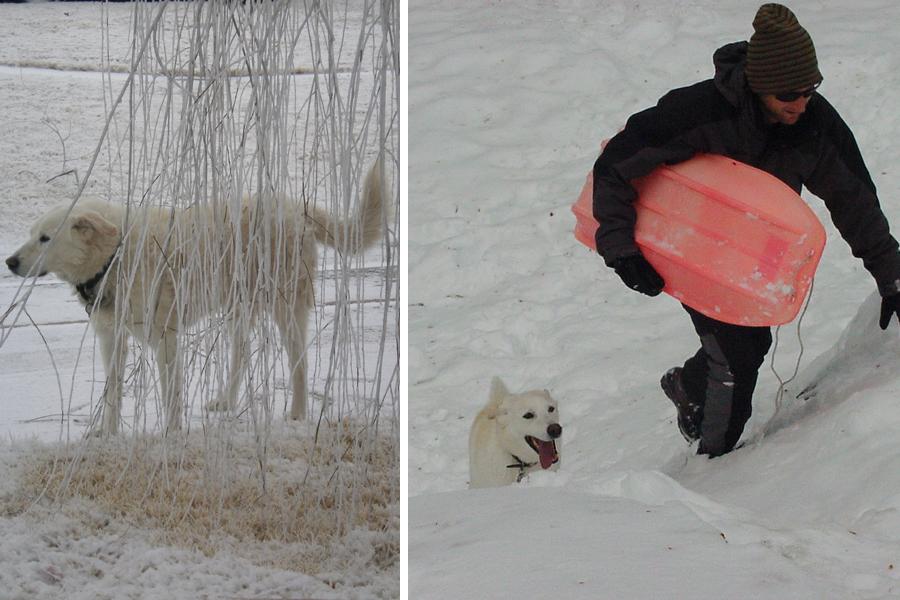 snow_puppy