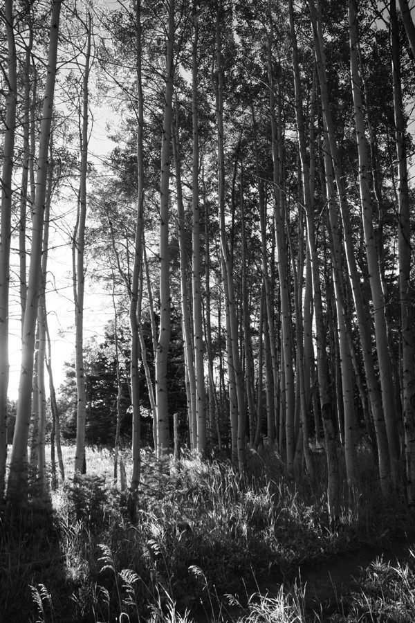 birch grove bw