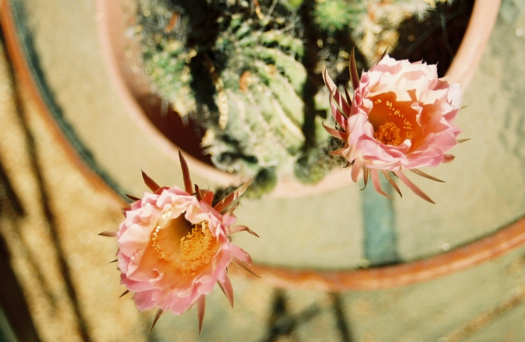 mary's flower