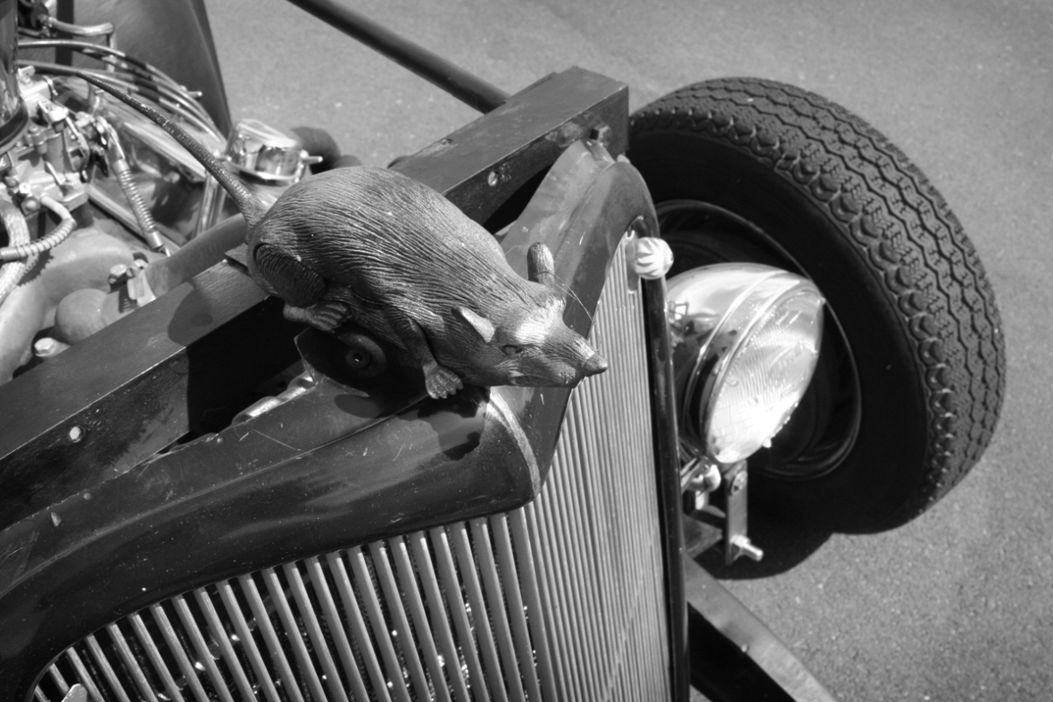 rat_car_bw