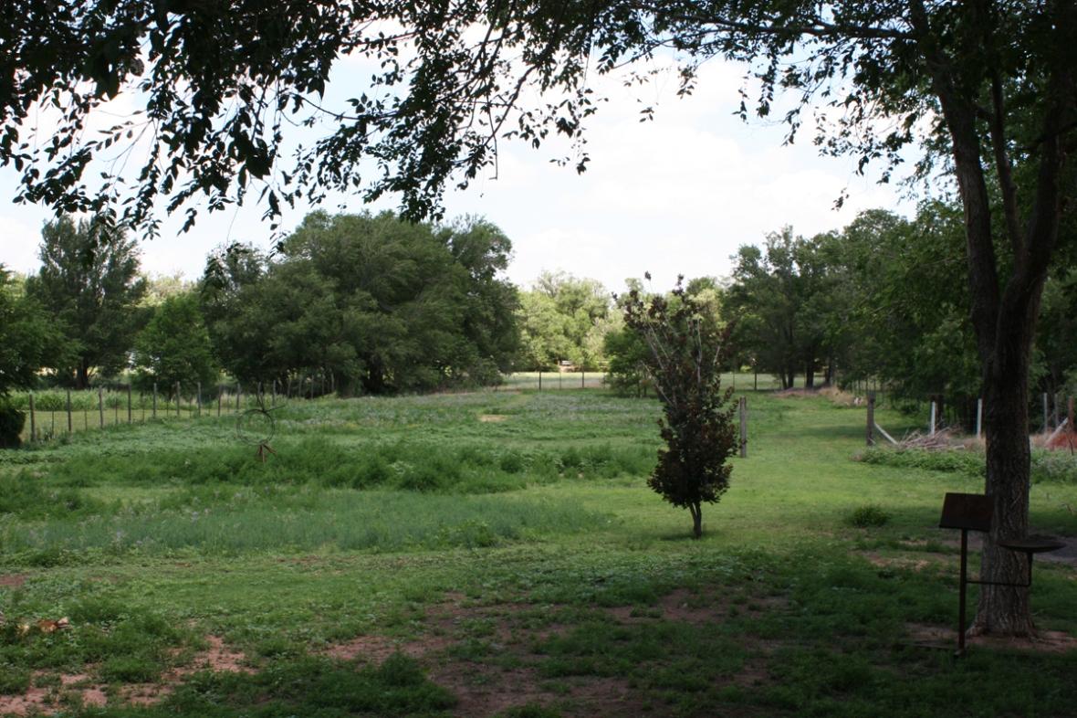 back yard 1