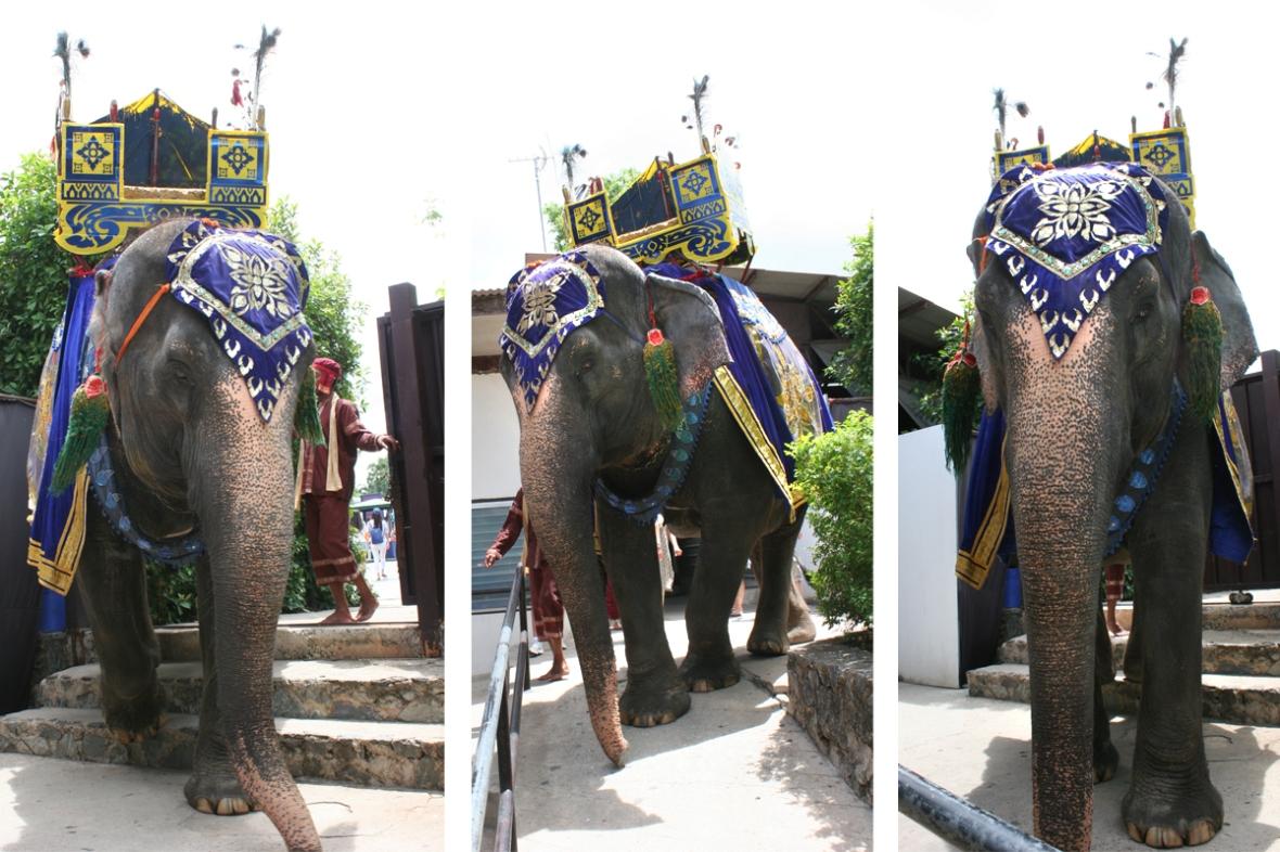 Nong Nooch Elephants