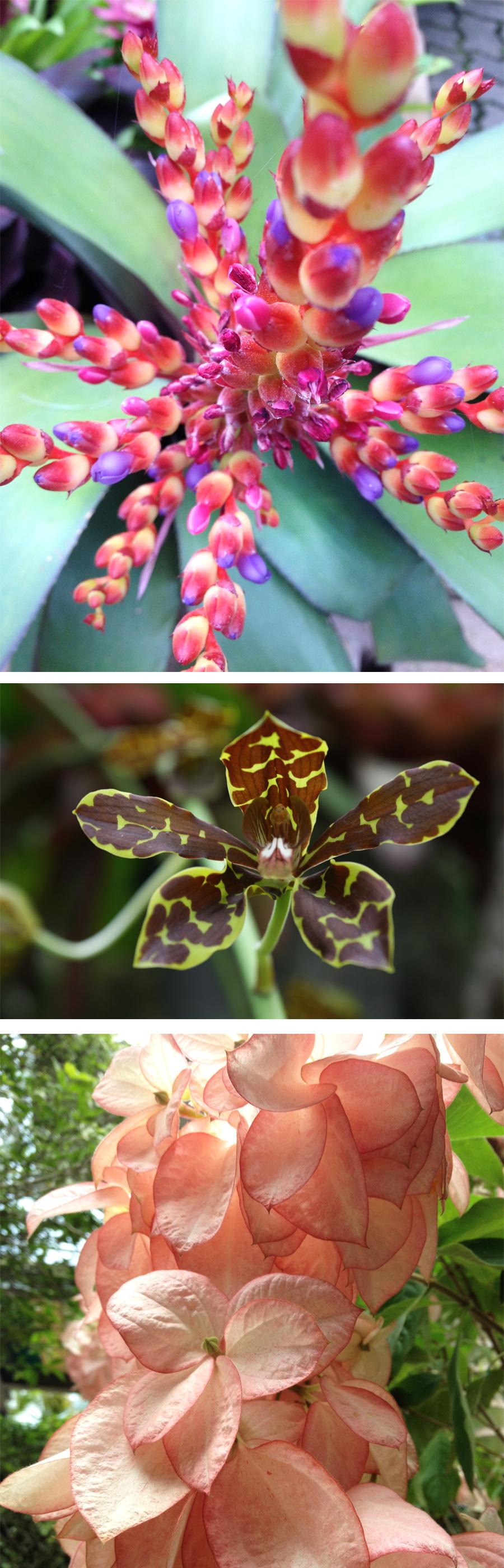 Nong Nooch Flowers 1
