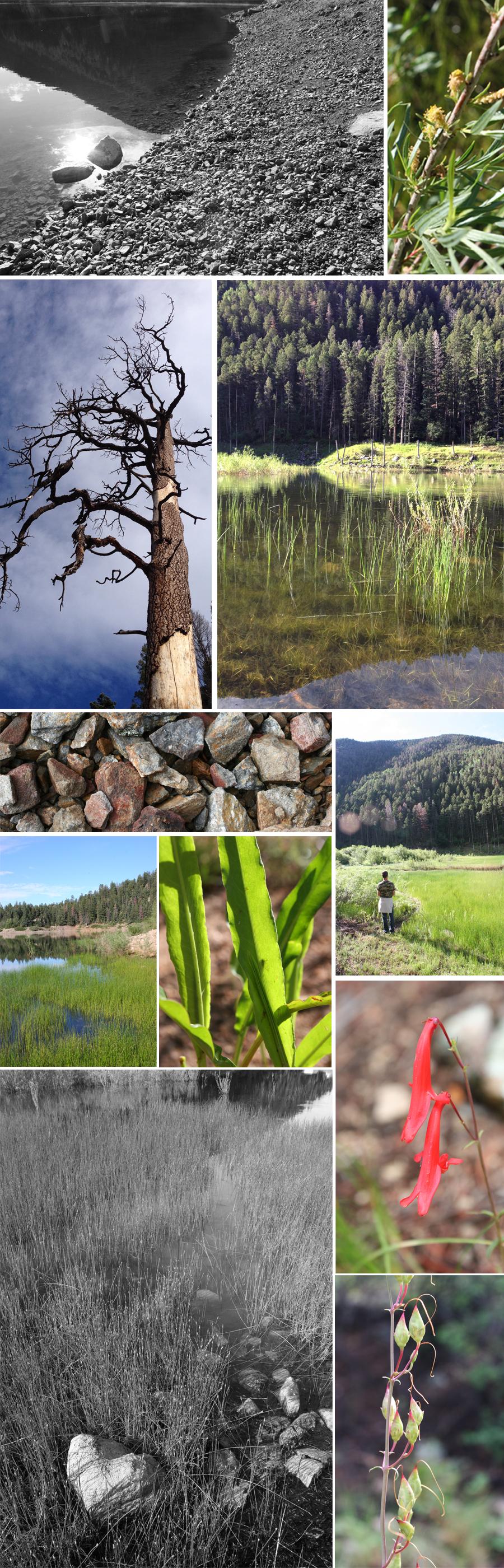 Cabresto lake New Mexico Collage