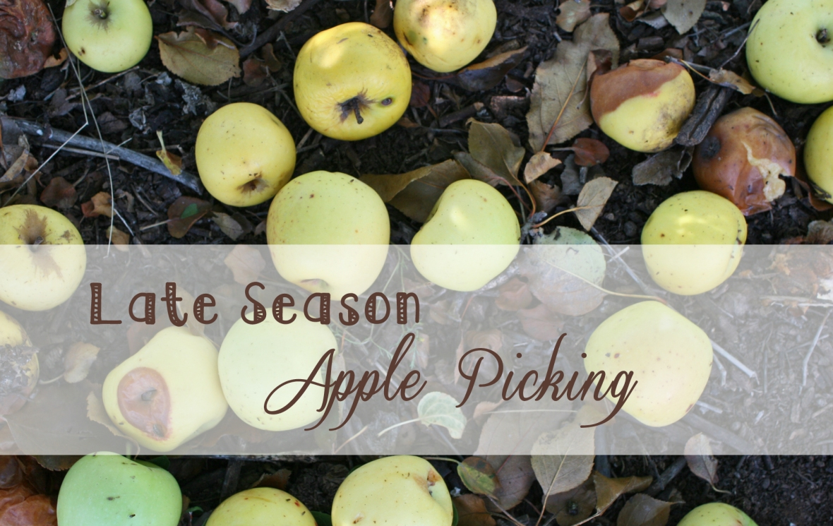 Late season Apple Picking