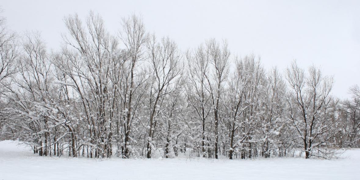 Amber_Howe_Grove_of_trees