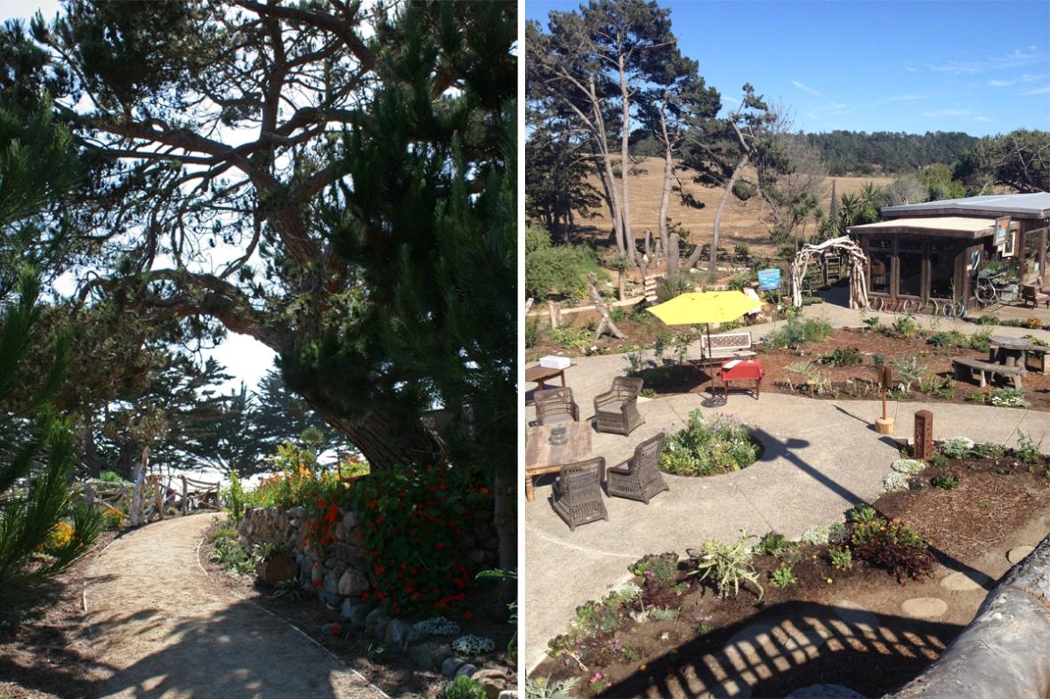 Centrally_Grown_Cambria_California_garden_1