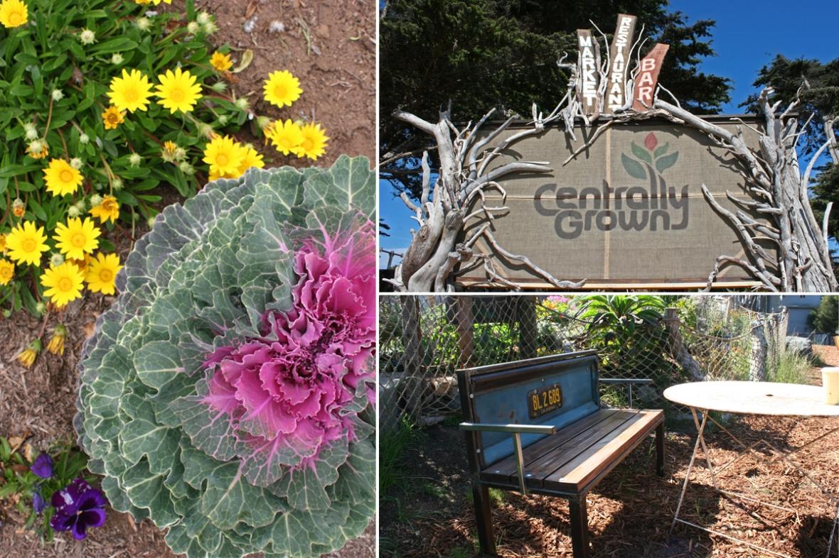 Centrally_Grown_Cambria_California_Sign
