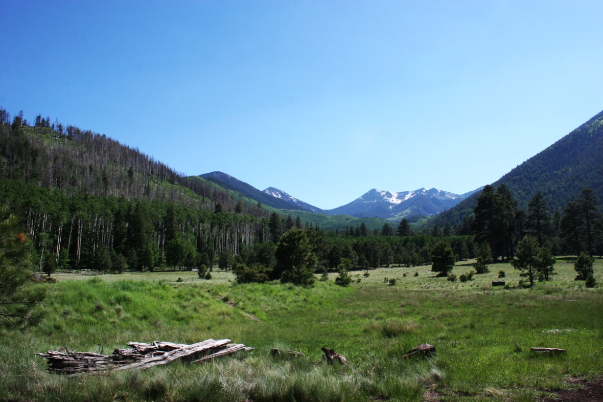 Lockett Meadow Arizona 1