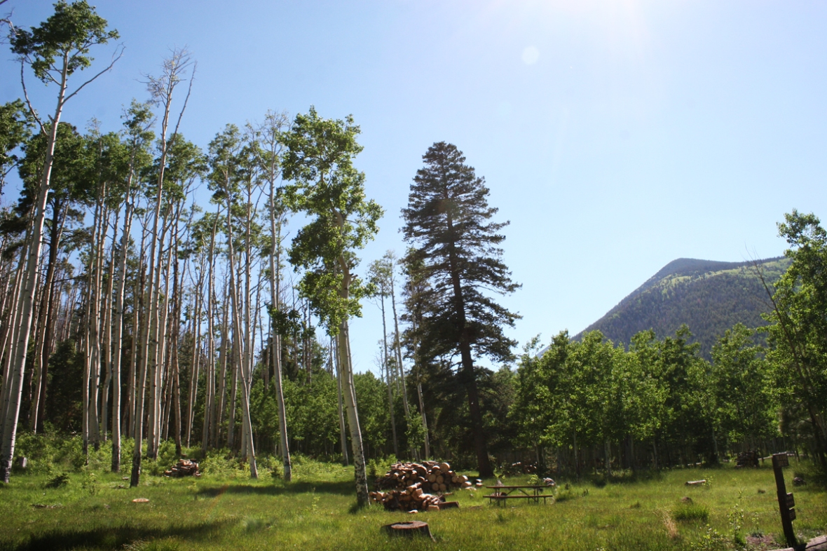 Lockett meadow Camping Arizona
