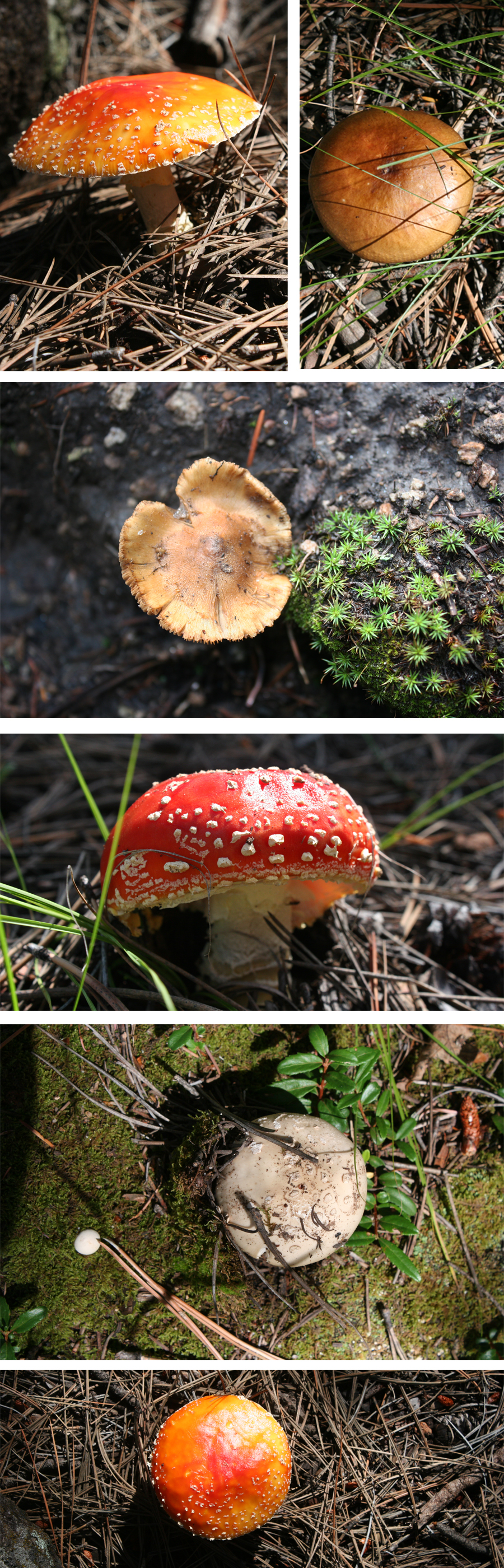 mushrooms_collage_New_Mexico
