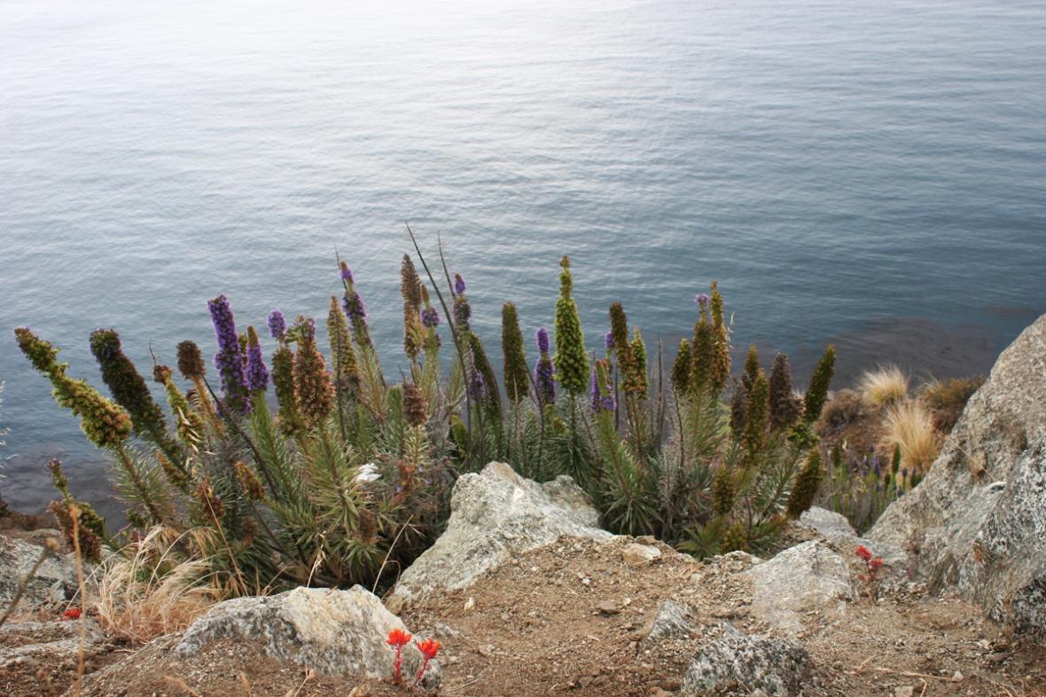 beach_flowers