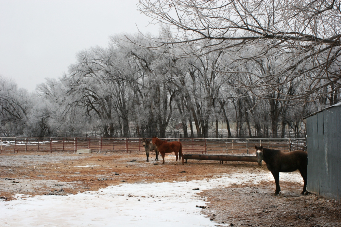 horses in freezing snow