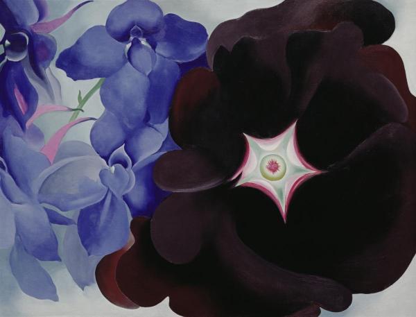 Black Hollyhock Blue Larkspur 1930