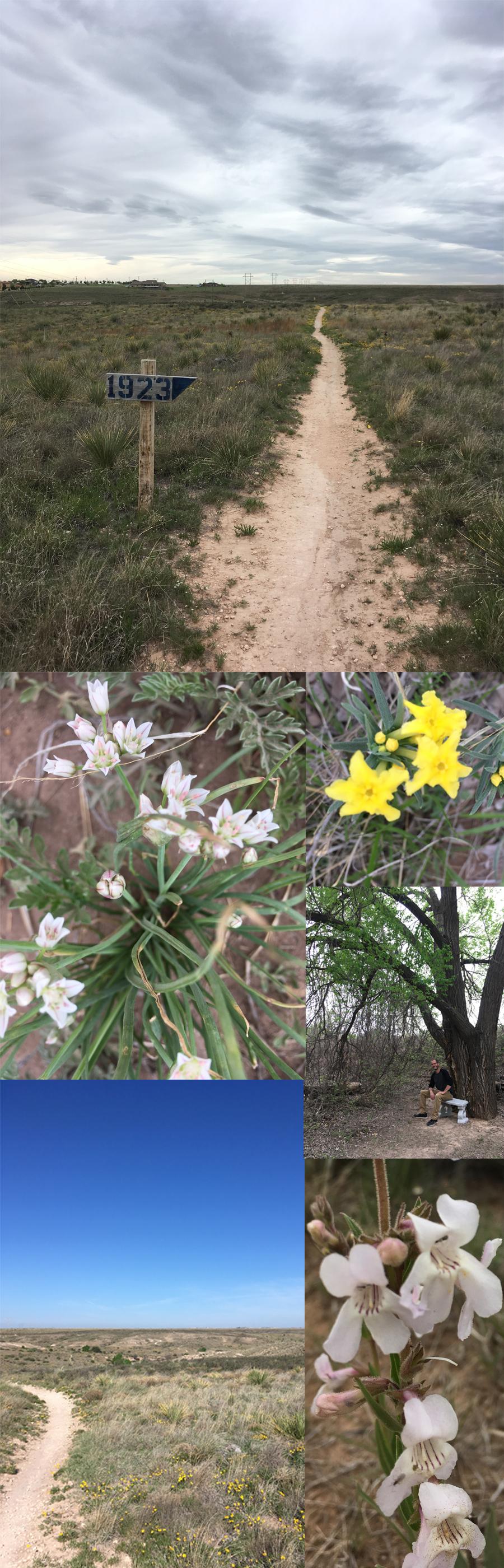 Amarillo Childrens Home trails scenery 2