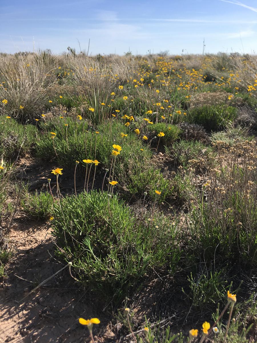 high plains wildflowers