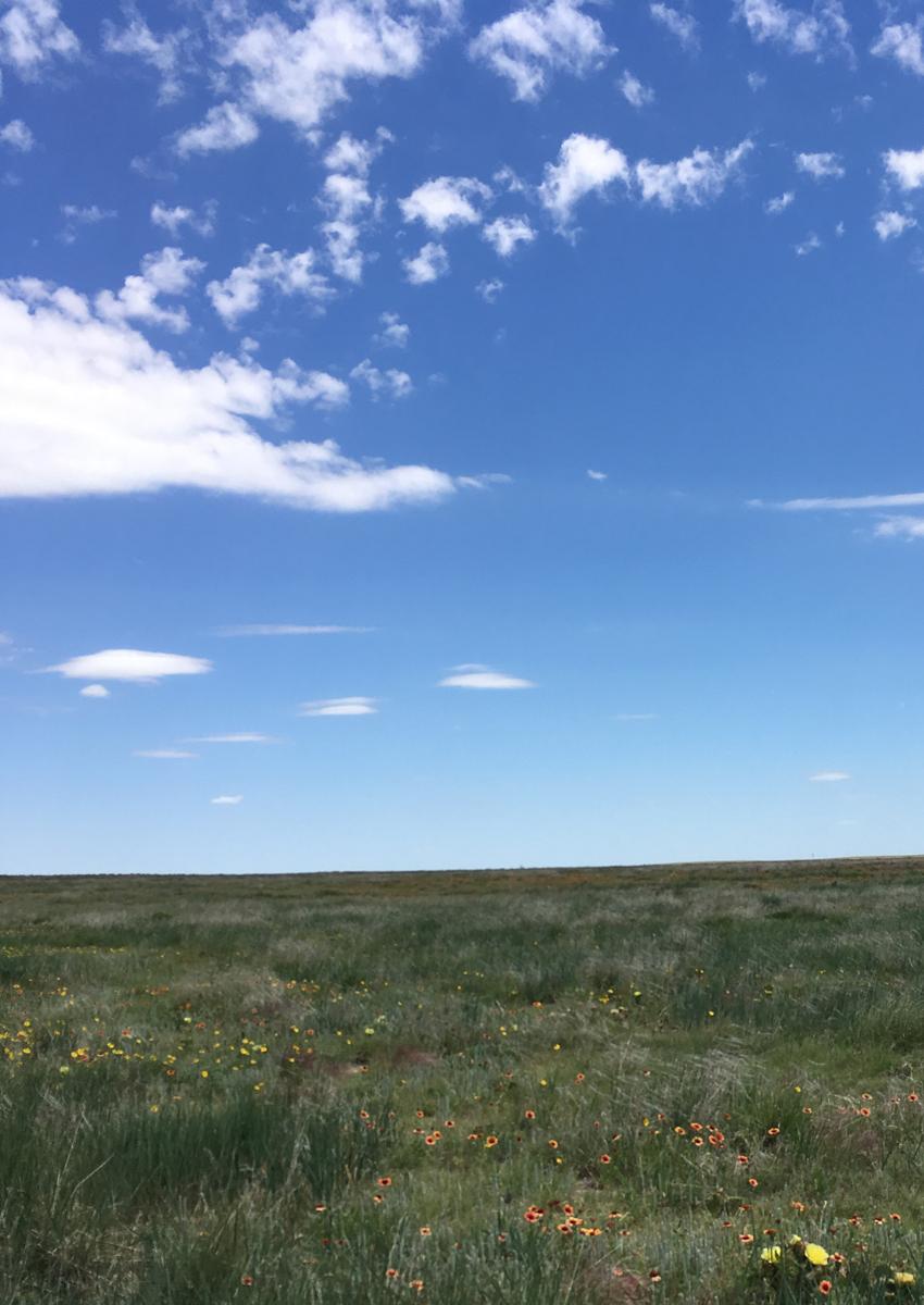 Cimarron National Grasslands 1