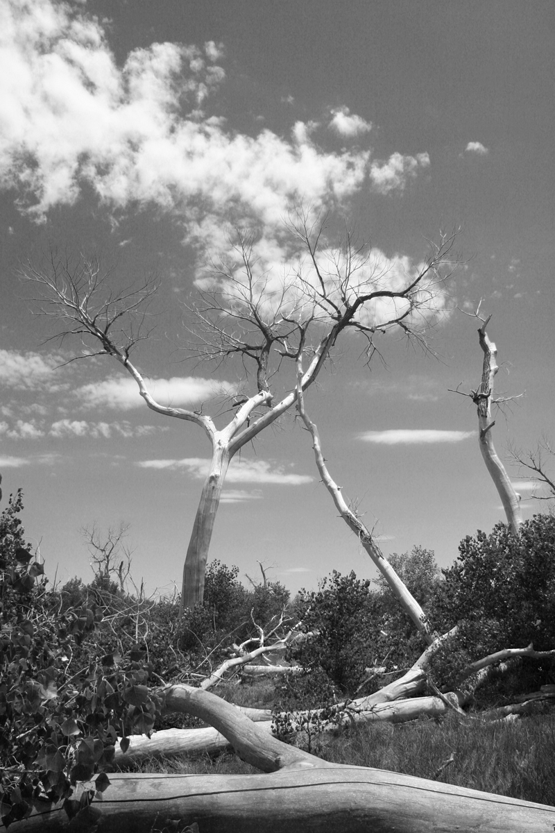 Cimarron National Grasslands Tree photography