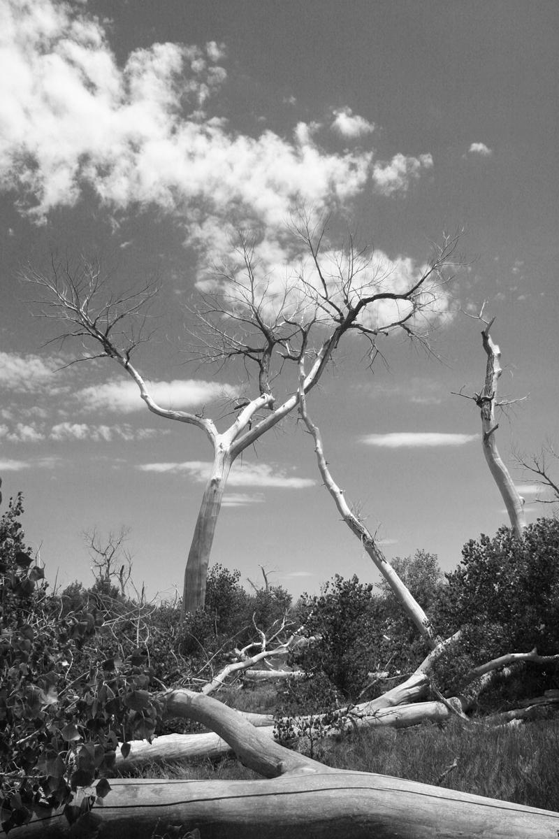 Cimarron National Grasslands Tree photography