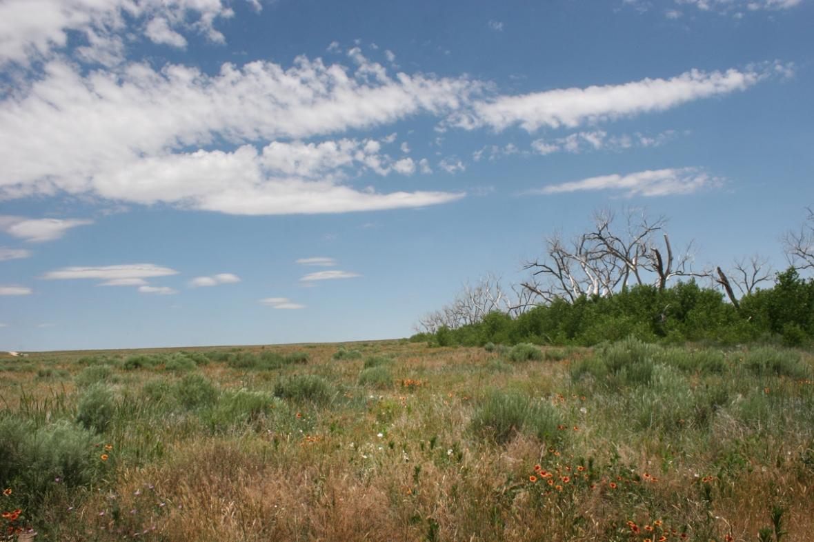 Cimarron National Grasslands Wildflowers 3