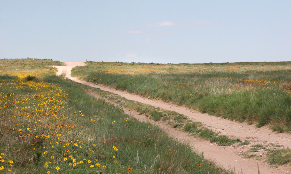 Cimarron National Grasslands Wildflowers photography