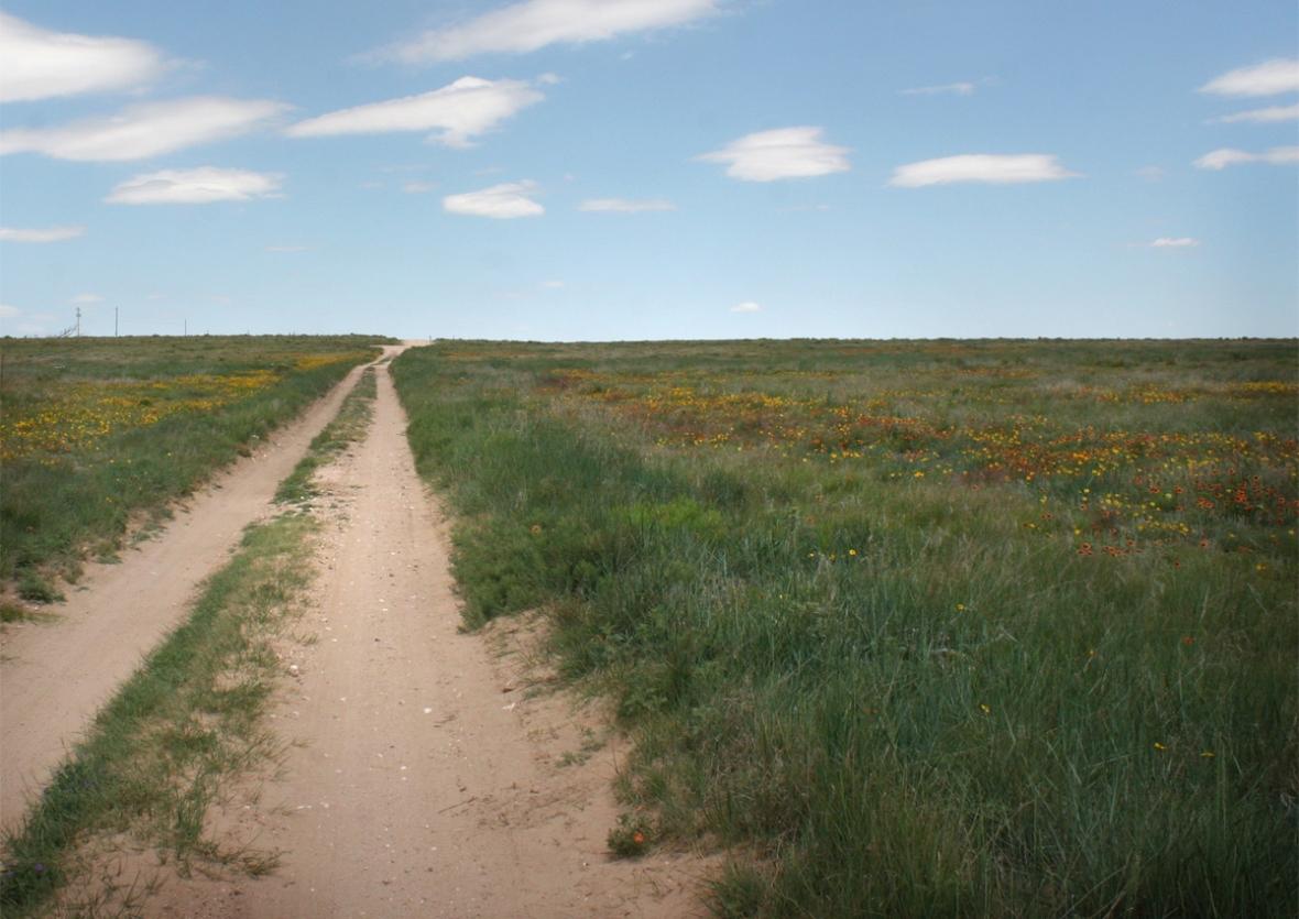 Cimarron National Grasslands Wildflowers