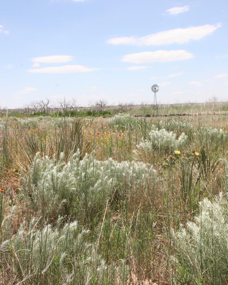 Cimarron National Grasslands windmill