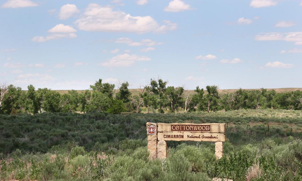 Cottonwood Cimarron National Grasslands 1