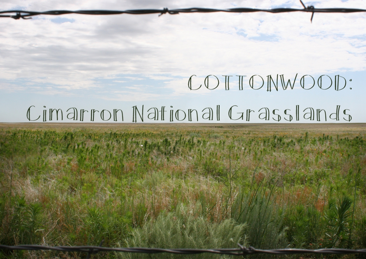 Cottonwood Cimarron National Grasslands