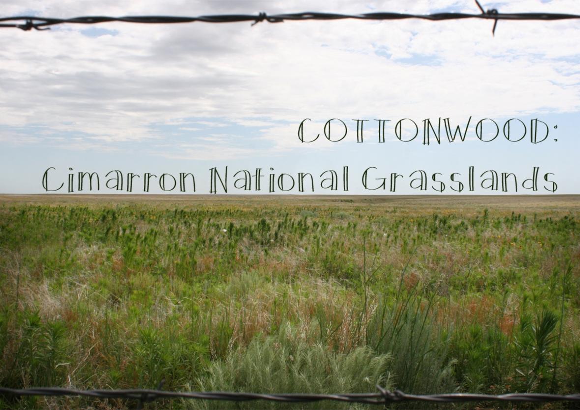 Cottonwood Cimarron National Grasslands