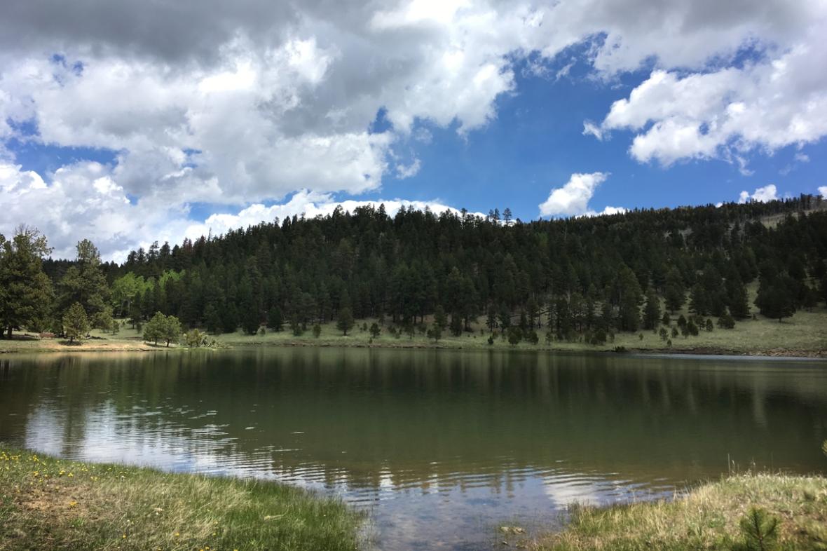 Shuree pond_1