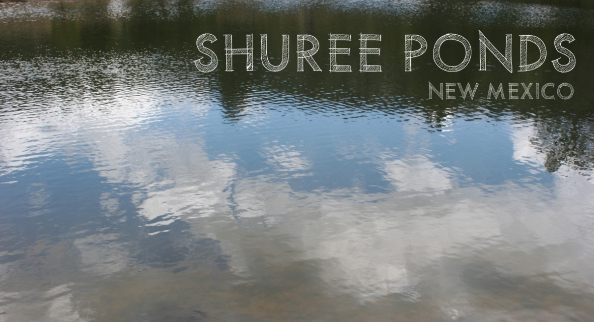 Shuree Ponds New Mexico