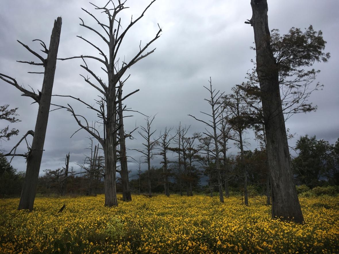 Amber Howe_Mississippi trees 2