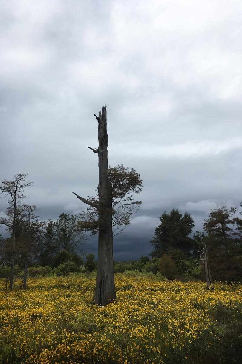 Amber Howe_Mississippi trees 3